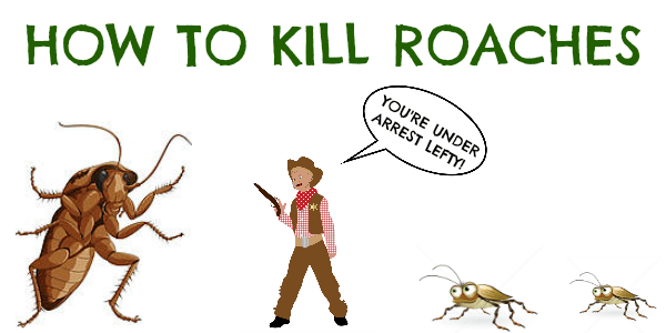 HOW TO KILL ROACHES