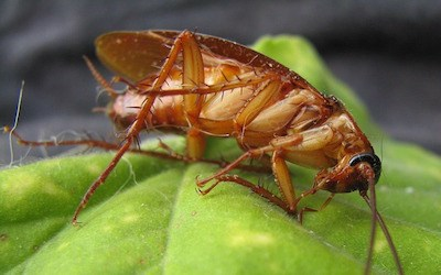 No One Wants Roaches In House Roach Treatment