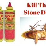 Boric Acid for Roaches ~ In Home Solutions!